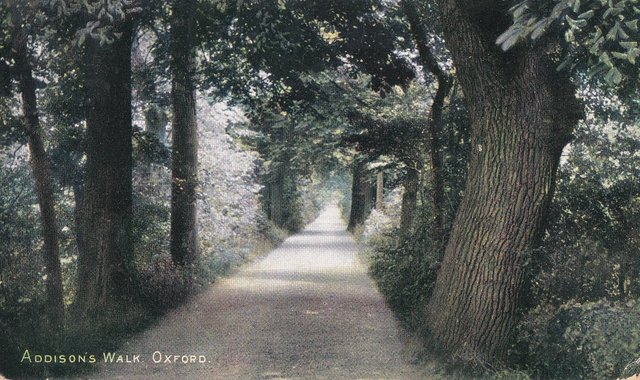 Addison's Walk, Oxford, Vintage postcard 1905