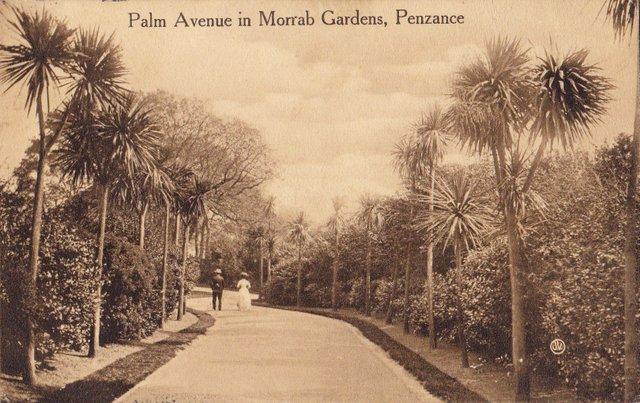 Vintage postcard sent 1909, Palm Avenue in Morrab Gardens, Penzance, Cornwall
